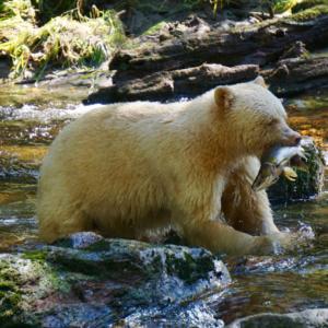 Great Bear Rainforest VR